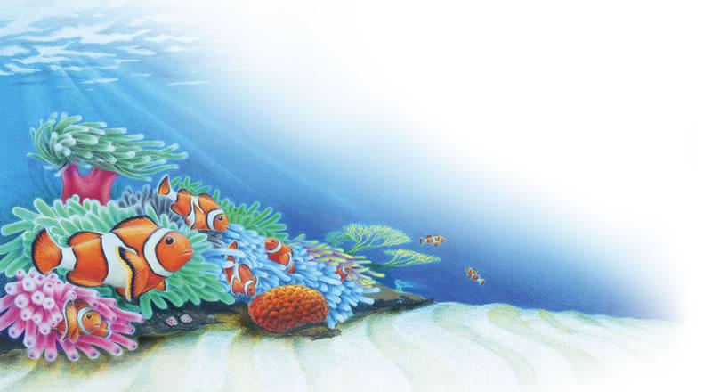 BDM Clownfish